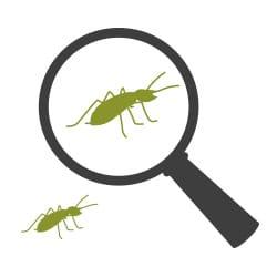 diy termite control